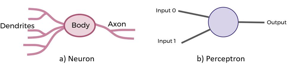 Figure showing biological neuron and perceptron